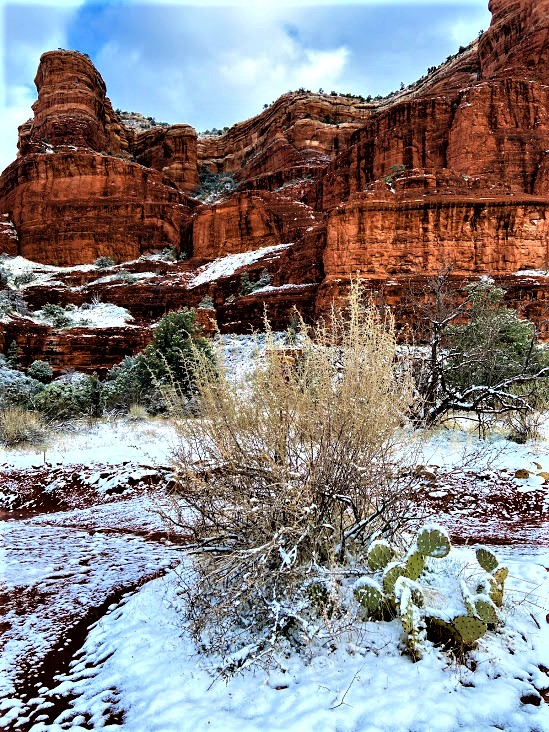 Courthouse Butte and Prickly Pear Cactus in the Snow, Sedona, AZ