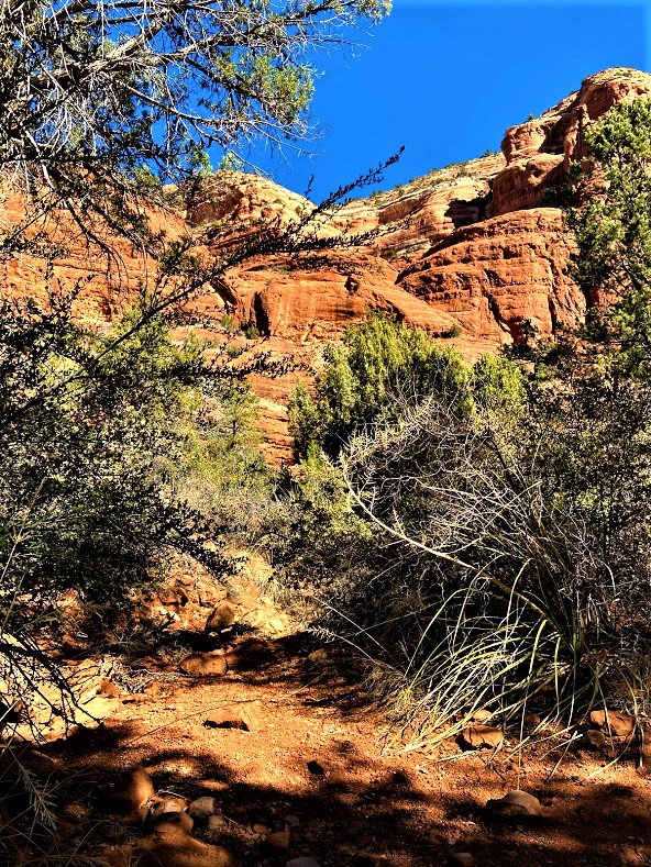 In the Shade of Courthouse Butte Big Park Loop Sedona AZ